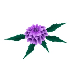 Purple Dahlia Flower on A White Background vector