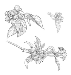 Vintage Collection of Hand Drawn Blooming vector image vector image