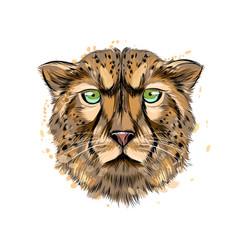 cheetah head portrait from a splash watercolor vector image