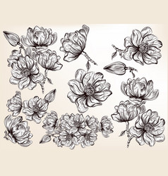 Collection of hand drawn magnolia flowers vector