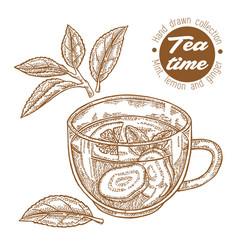 hand drawn cup tea herbal tea with lemon mint vector image