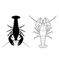 Shadow of a lobster vector