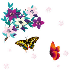 butterfly and flower white background image vector image