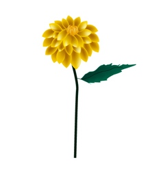 Yellow Dahlia Flower on A White Background vector image
