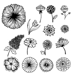 Collection of hand painted flowers background vector