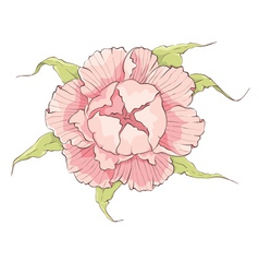 Flower - Pink peony vector image