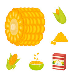 design of maize and food icon collection vector image