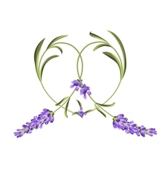 Heart frame of lavender flower vector image
