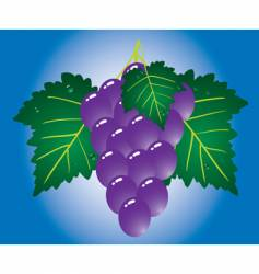 purple grape on blue background vector image vector image