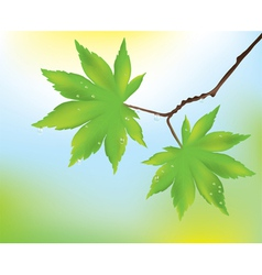 maple leaves and rain drops vector image vector image