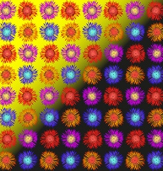 Asters daisies and hyacinths vector image