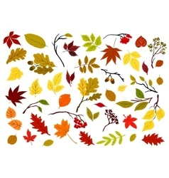 Autumnal leaves berries and herbs vector image vector image