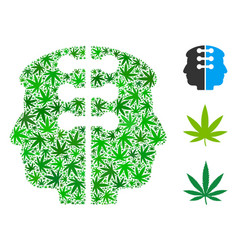 Dual head interface composition of marijuana vector