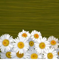 Green striped background with flowers of camomile vector image vector image