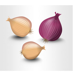 isolated onion yellow and purple photorealistic vector image
