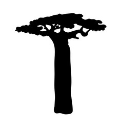 Silhouette baobab icon tree flora vector