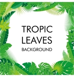 Tropical Leaves background isolate vector image vector image