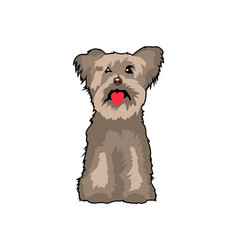 yorkshire terrier puppy dog vector image
