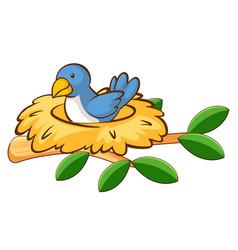 Bird in nest on white background vector