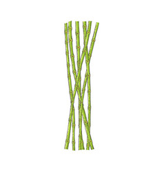 bundle of green bamboo stems in sketch style vector image