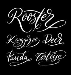 rooster animal hand written typography vector image