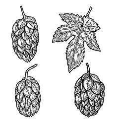 set beer hop in engraving style design element vector image