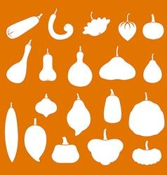 squash set orange vector image