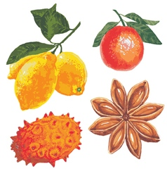 Set of fruits on a white background vector image vector image