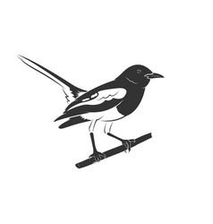 oriental magpie robin bird design vector image