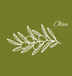white hand drawn olive branch on green background vector image