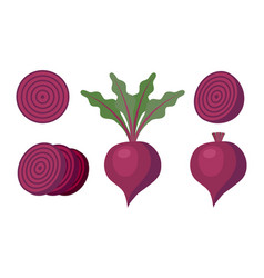 Whole beet and slices vector