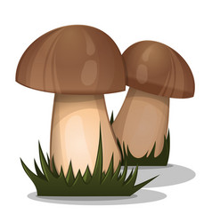 organic nature forest mushrooms in grass vector image