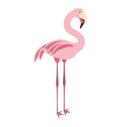 Isolated cute flamingo vector