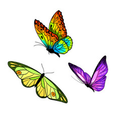 set three bright butterflies full color sketch vector image