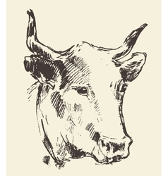 Cow head with bell dutch cattle breed drawn sketch vector image vector image