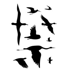 Birds black drawing silhouette image set vector