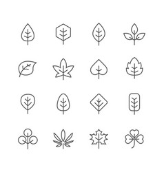 fall leaves line icons set vector image