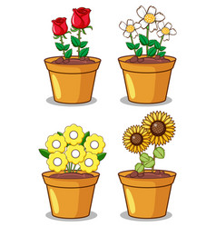four potted plants with different flowers vector image