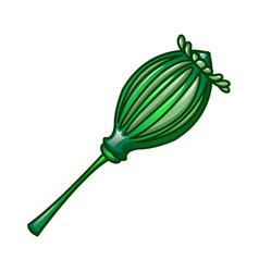 green poppy icon cartoon style vector image