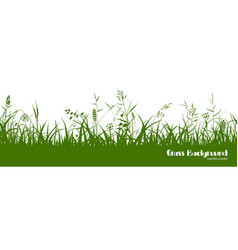 silhouettes of green grass spikes and herbs vector image