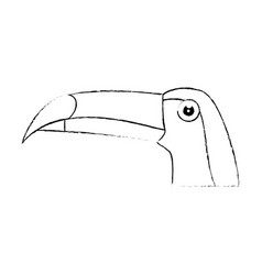 Wild tucan cartoon vector