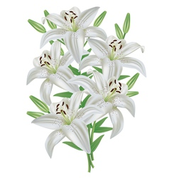 Lily flower bouquet isolated on white background vector image vector image