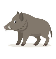cute forest animal gray boar icon isolated on vector image