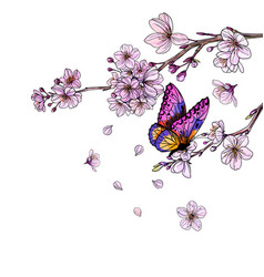 purple butterfly on sakura branch with flowers vector image