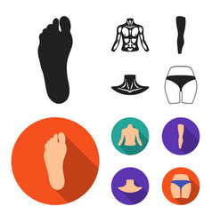 torso leg neck and buttocks body parts set vector image