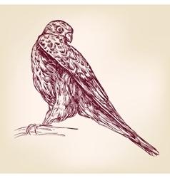 hawk bird of prey - hand drawn llustration vector image vector image