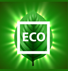 green leaf with light beams and eco frame eco vector image