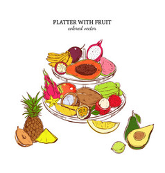 hand drawn exotic fruits template vector image