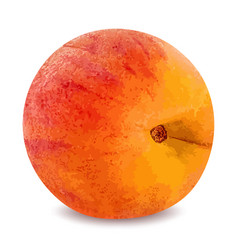 ripe peach fruit isolated on white background vector image