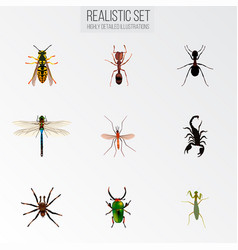 set of insect realistic symbols with ant vector image
